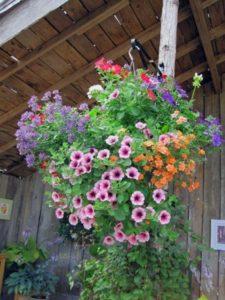 2009-kleijn-nurseries-hanging-baskets-2