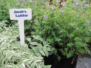 kngt-shady-plants-1